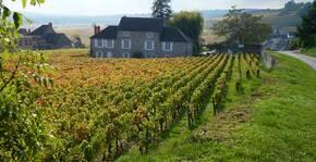 Domaine Hervé de Lavoreille - La vigne