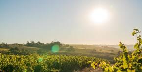 Caves de la Loire - Le vignoble