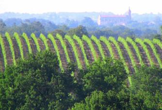 Villa Dria - Le vignoble