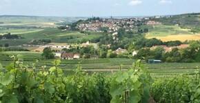 Champagne Charlier et Fils - Le Vignoble