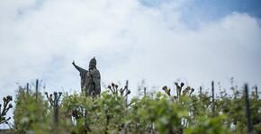 Champagne Charlier et Fils - Statut dominant les vignes