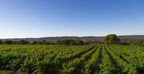 Maison Brotte - Le vignoble