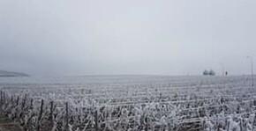 Champagne Poirot - Les vignes en hiver sous la neige