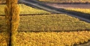 Domaine Duffau - La vigne