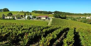 Domaine Vayssette - Les rangs de vigne
