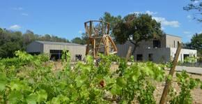 Mas de l'Oncle - Le vignoble