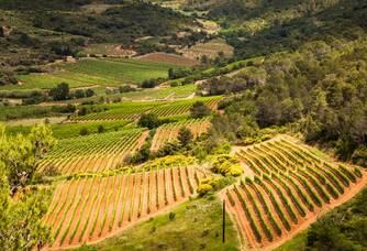 Domaine La Madura - Le vignoble vu du ciel