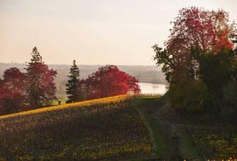 Château la Closerie de Fronsac - Les vignes au printemps