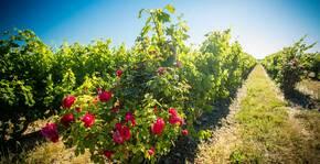 Château Auzias-Paretlongue(Languedoc) : Visite & Dégustation Vin