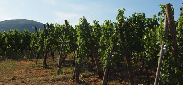 Domaine Vins d'Alsace Sylvain Hertzog