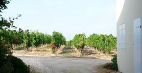 Château de France - Les rangs de vigne