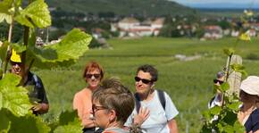 Vis ma vie de vigneron bio : des initiations gratuites au métier de viticulteur