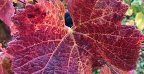 DOMAINE CLOS SAINT JEAN(Bourgogne) : Visite & Dégustation Vin
