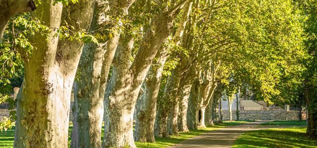4005 Chemin de la Martinette