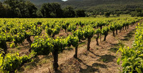 Terre des 2 Sources(Languedoc) : Visite & Dégustation Vin