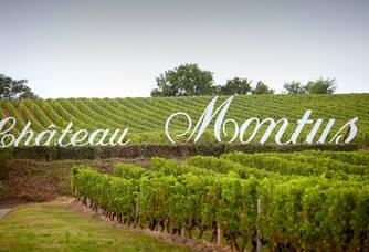Les vignes du domaine du Château Montus