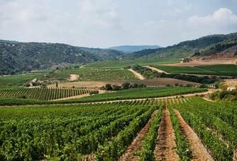 Les vignes du Château de Lastours