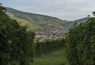 Belle vue sur les vignes du Domaine Rieflé