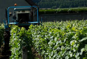 Olivier en plein travail dans les vignes du Champagne Marteaux Guyard