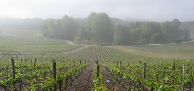 Champagne Trichet-Didier