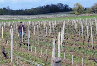 Les vignes du Château Meylan en hiver