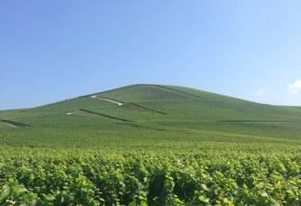 Le vignoble du Domaine Champagne Brimoncourt