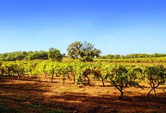 Le vignoble du Château des Bormettes vue de jour