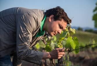 Yannick Burles dans ses vignes