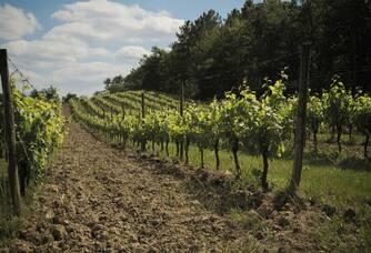 Le vignoble du Château Ferran
