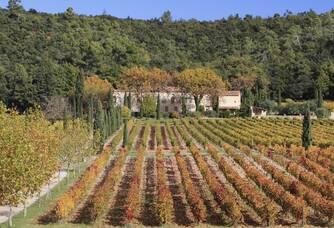 Le vignoble du Château La Calisse