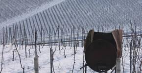 Le vignoble enneigé du Domaine Brocard