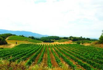 Superbe vue du vignoble du Domaine des Escaravailles