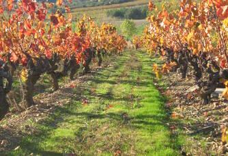 Les belles couleurs de l'automne au domaine des Païssels