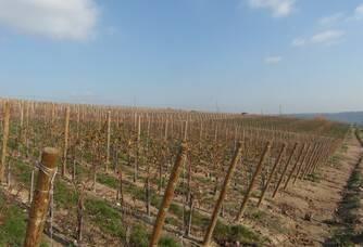 Le vignoble du Domaine Jeanne Gaillard
