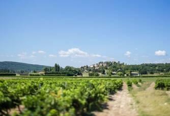 Vue panoramique du vignoble du Domaine Rozel