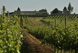 Le Château Ducourt surplombant le vignoble