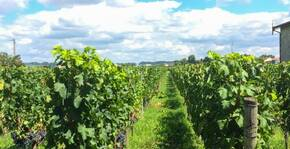 Une autre vue des Vignobles Bardet