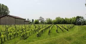 Le vignoble du Domaine des Vignobles Bardet