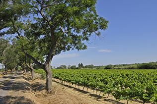 Région de Languedoc